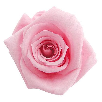 INNROBB-15-07 Baby Rose