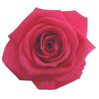 #08 Hot Pink