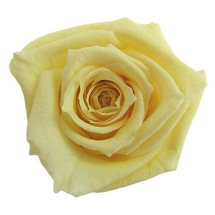 INNROBB-15-15 Baby Rose
