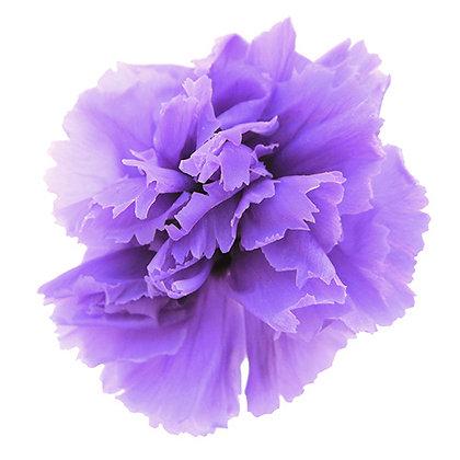 INNCVSM-15-14 Mini Carnation