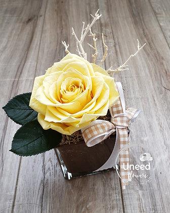 UN-0193-15 Soft Yellow Premium Rose Arrangement