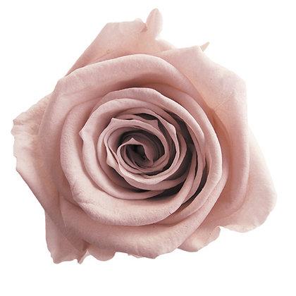 FL0300-55 Mediana Rose