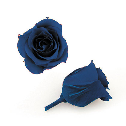 FL041-59 Piccola Blossom Rose