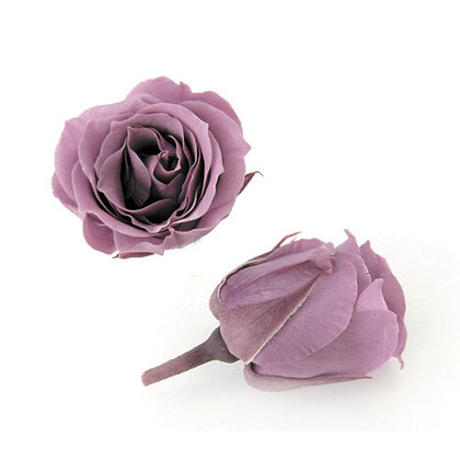 FL041-14 Piccola Blossom Rose