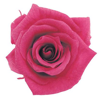 INNROBB-15-22 Baby Rose