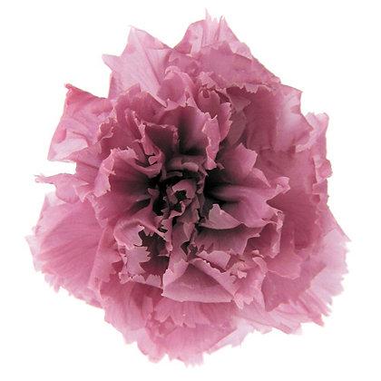 INNCVSM-15-20 Mini Carnation