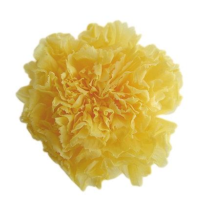 INN-CVST-6-2 Yellow - Carnation Standard