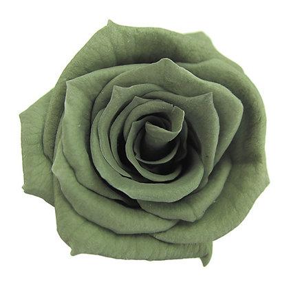 INNROBB-15-25 Baby Rose