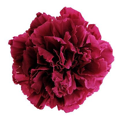 INN-CVST-6-40 Cranberry - Carnation Standard