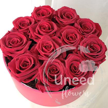 UN-0114 Anteros Cherry Red