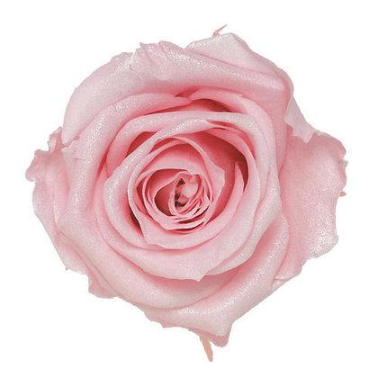 FL0106-07 Sparkling Standard Rose