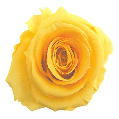 #02 Yellow
