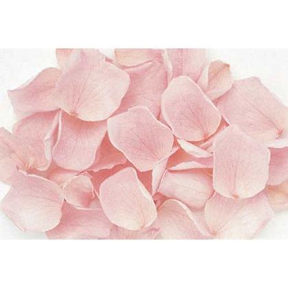 FL019-07 Rose Petals