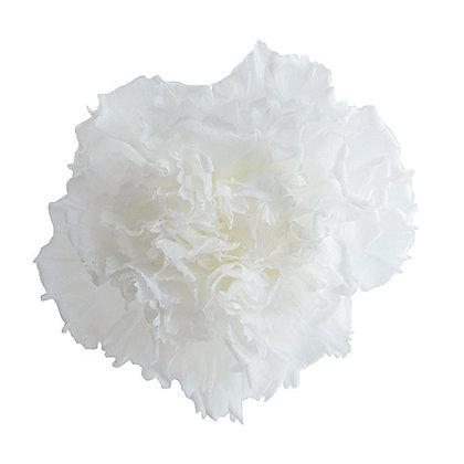 INN-CVST-6-1 White - Carnation Standard