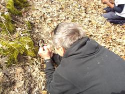 Spotting Native Plants