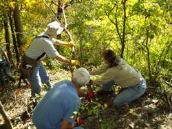 Removing Invasive Tree of Life