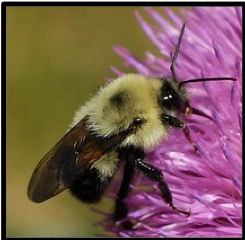 Bees Evoke                                                 Sacred Gifts of Awe and Wonder