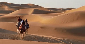 Camels in the UAE 2 (Large).jpg