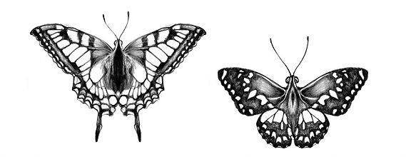 8 - borboletas (Large).jpg
