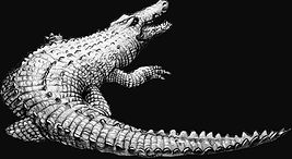 crocodilo ilustracao (Small).jpg