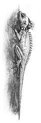24 - forest dragon (Small).jpg