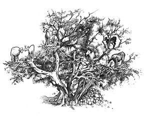 15 - Cabras na árvore final.jpg