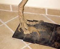 PICT3333 garra assassina do Deinonychus