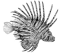 14 - red lion fish (Large).jpg