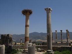 Basílica e Templo Capitolino Volubilis 5