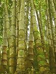 bambu 3.JPG