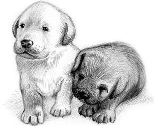 6 - Labrador.jpg