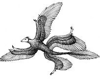 10J – Microraptor (Medium).jpg