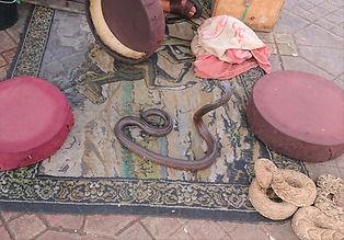 Encantador de serpentes em Marraquexe 2
