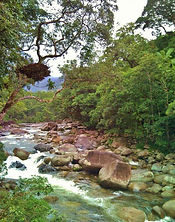 epifita mossman river (Medium).jpg