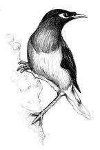 16 – Pássaro falante (Medium).jpg