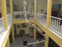 DSC03808 cauda de um sauropode supersoni