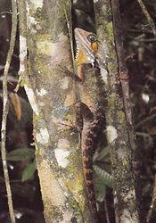 24 - forest dragon 2 (Small).JPG