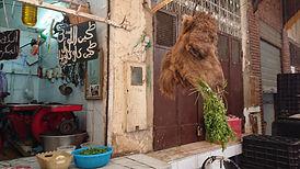 cabeça de camelo.JPG
