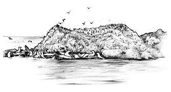 9 - Rocha focas e aves   final.jpg