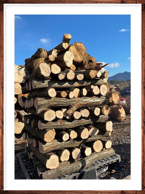 ほだ木原木