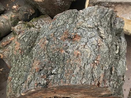楢薪の含水率チェック