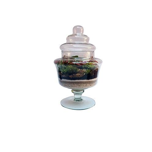 terrario com planta dentro do vidro