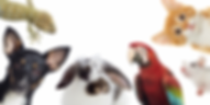 pets_and_money_hero_image_-_minus_guinea