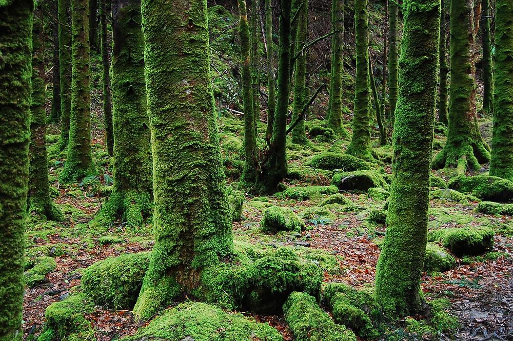 communication avec les arbres