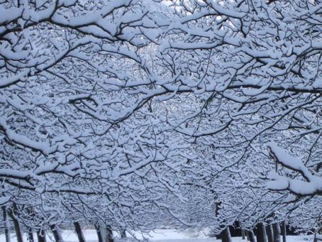 L'hiver 2019 et son rythme