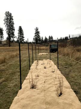 Omak Creek Riparian Planting