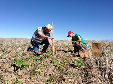 farmer and intern measuring cover crop growth
