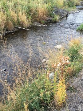 Omak Creek Riparian Restoration