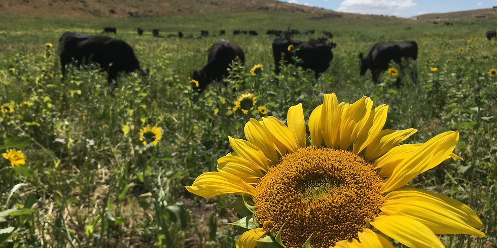 North Central Washington Cover Crop Grazing Tour