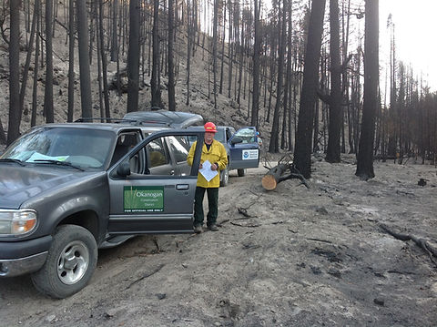 post-fire site visit burned trees
